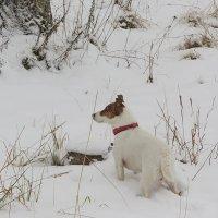 Снежные прогулки :: Liliya Kharlamova