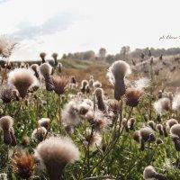 в ожидании ветра... :: Elena Wise