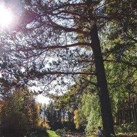 Хорошо в лесу :: Elena Wise