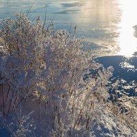 Трава у дома :: Андрей Шаронов