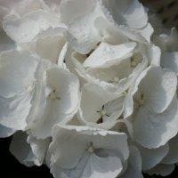 Оттенки белого ... :: Алёна Савина
