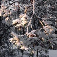 И снегопад цветами января... :: Лесо-Вед (Баранов)