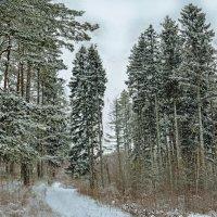 У заснеженного леса ... :: Юрий