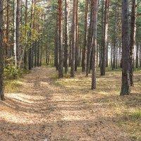 Дорога в лесу :: Elena Wise