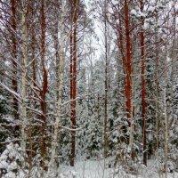Зимний лес :: Натала ***