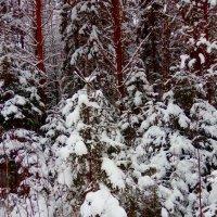 Сказочный зимний лес :: Натала ***