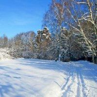 Зима :: Ольга Довженко