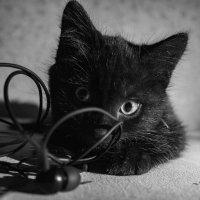 Кузя черный кот :: Мария Белая