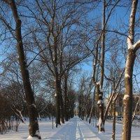 Зима в Царском Селе :: Наталья Герасимова