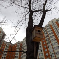 С мыслями уже о весне :: Андрей Лукьянов
