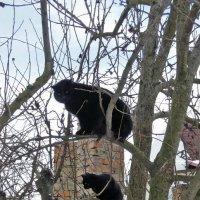 Видать весна скоро... Коты прилетели... ) :: Тамара Бедай