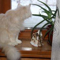 На окне. :: Венера Чуйкова
