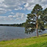 Озеро Ферапонтовское :: Roman M,