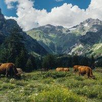 В горах Грузии :: Кирилл Гудков