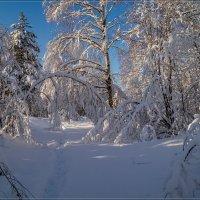 Утро в зимнем лесу :: Андрей Дворников