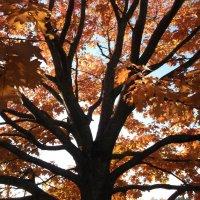 Осенний букет золотой... :: Анна .