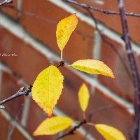 последние листья... :: Elena Wise