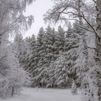 И снова снег укрыл неслышно, пока все спали, этот мир... :: Наталья Димова