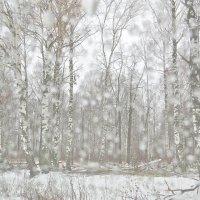 а снег идет.... :: НАТАЛЬЯ