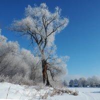 Старое дерево спит до весны :: Мила Раменская (Забота)