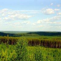 Зелёное море тайги... :: Анна Суханова