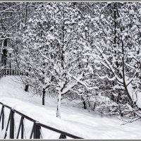 Зимняя зарисовка :: Владимир Кроливец