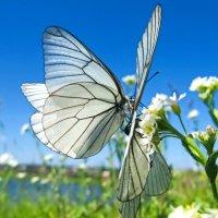 Охота на бабочек.. :: Сергей Фатеев