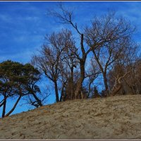Мир деревьев :: Татьянка *