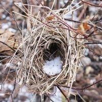 Гнездо :: Екатерина Генералова