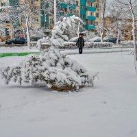 Мимолётное виденье :: Анатолий Чикчирный