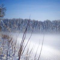 Зимний туман :: Elena Vershinina