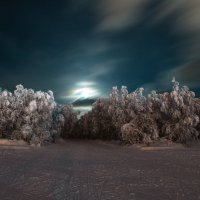 Зимний лес :: Сергей Пеунов