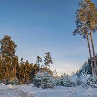 Мороз и солнце день чудесный! :: Владимир Ефимов