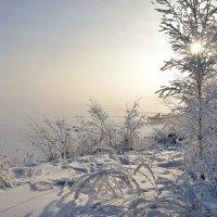 Туманным утром у озера :: Владимир Звягин
