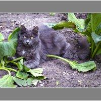 Пусти котенка в огород...... :: Марк Э