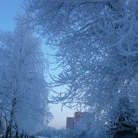 Январь :: Алёна Савина