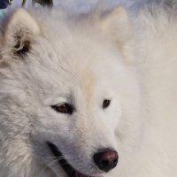 Весёлый пёс :: Наталия Григорьева