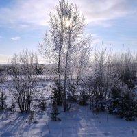 Зимний день :: Вера Андреева