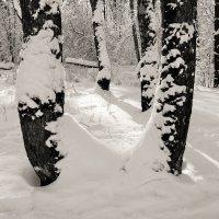 Зима. :: Лариса Исаева