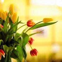 А я люблю тюльпаны ! :: Мила Бовкун
