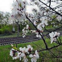 Про дождь, дорогу и весну... :: Александр Резуненко