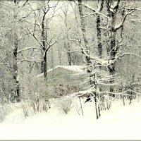 Зимой в Александровском парке  4 :: Сергей