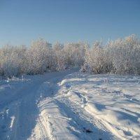 Зимняя дорога :: Anna Ivanova