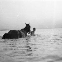 Купание коня :: Андрей Еремеев