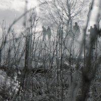 Лесной пожар :: Андрей Еремеев