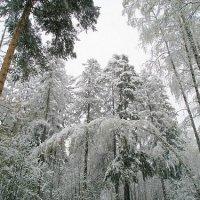В зимнем бору :: Ирина Малыхина