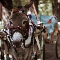 Я маленькая лошадка и мне живется несладко... :: Sergey Lamonov