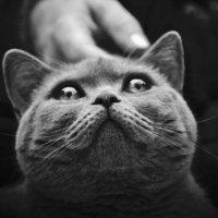Улыбка Кошки :: Геша Кульпина