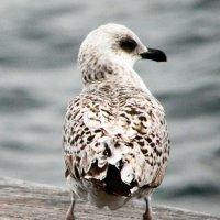 Птица :: Лара Лаби