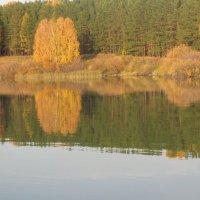 Осень отразилась в воде :: Ольга Лобова